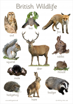 1. British Wildlife Photo Poster