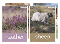 On The Moors Poster Pack